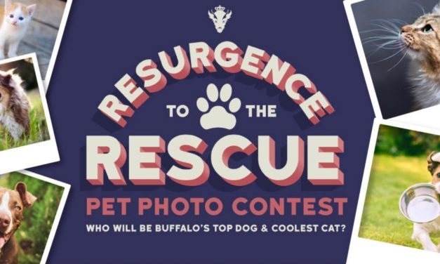 Resurgence Brewing's 'Resurgence to the Rescue Pet Photo Contest' Raises More Than $60,000